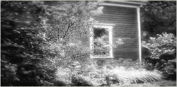 yard flowers bushes house clapboard warm roamin