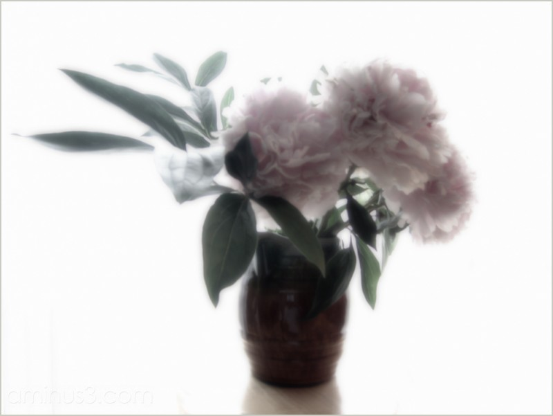 happy summer bouquet flowers vase backlit roamin