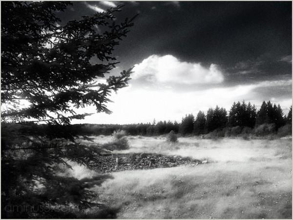 field treeline north summer rocks roamin