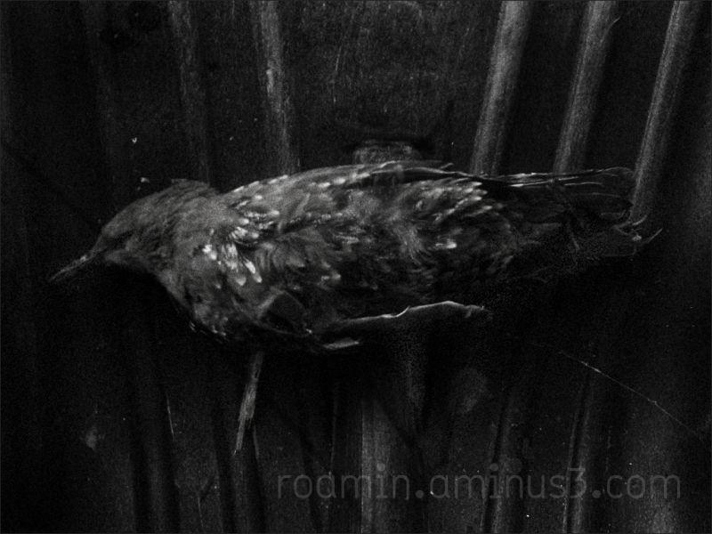 dark solemn sad bird trapped unable helpless