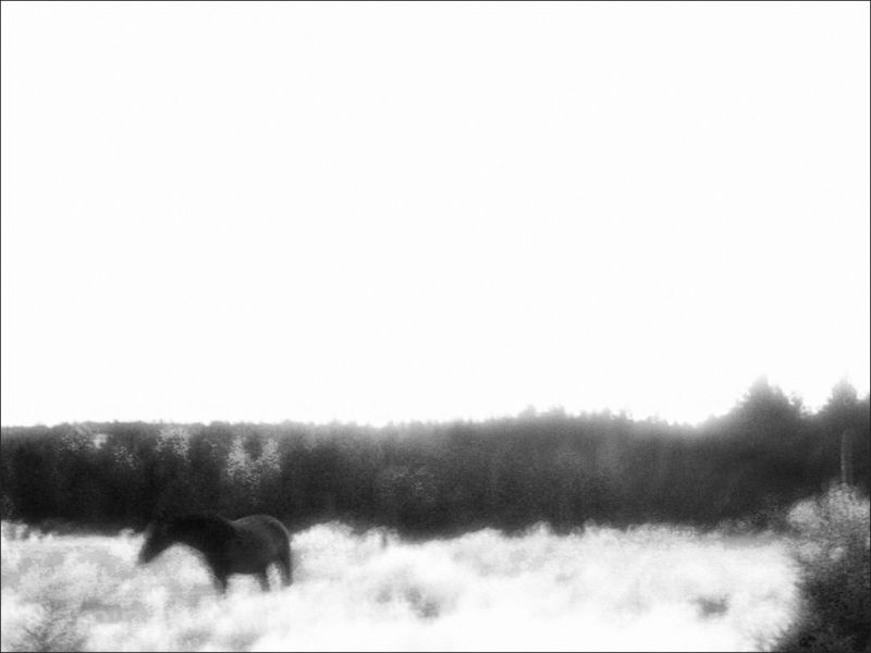 nightfall treeline north roamin
