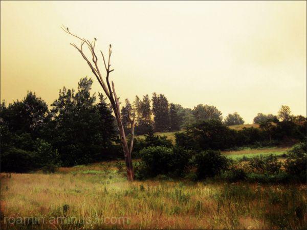 morning-light foggy-dawn daybreak farm hwy6 roamin