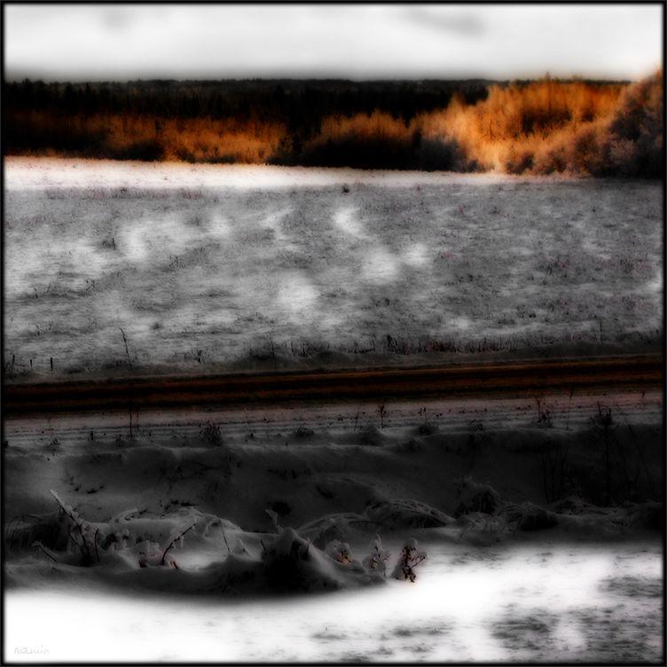 snowbound roamin cornfields late-afternoon