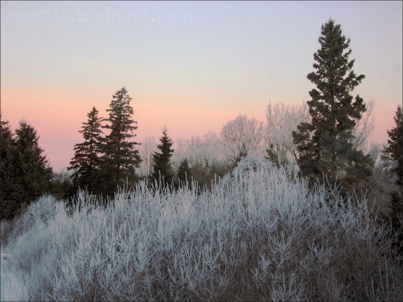 trees nightfall frost roamin ice-fog sunset chilly