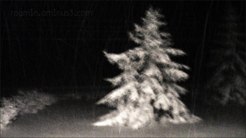 winter snow trees storm nightfall roamin
