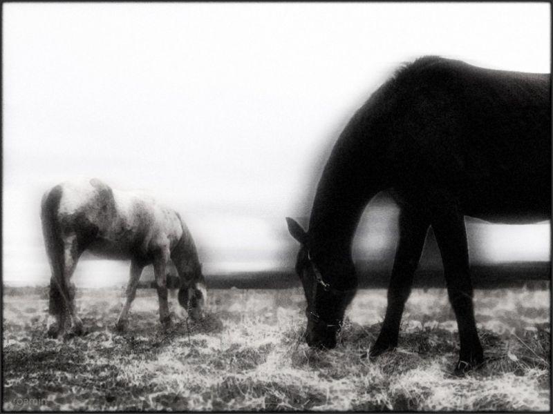 roamin short-days long-nights shadows field horses