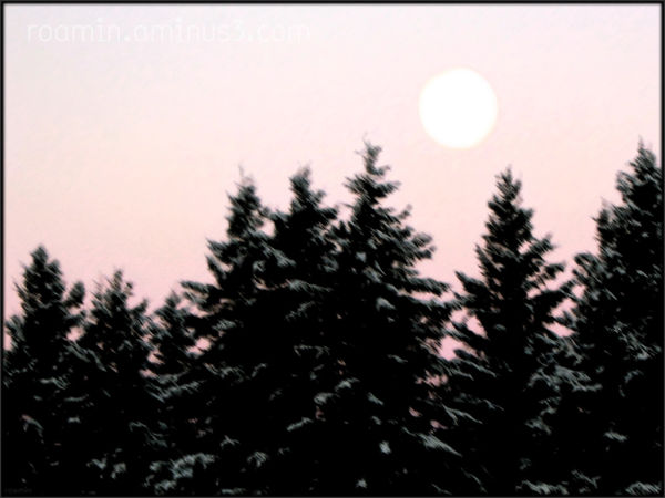 pink-sky full-moon spruce-grove winter roamin