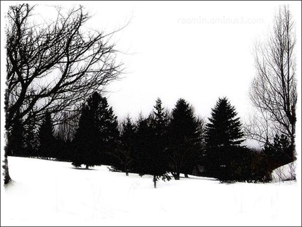 snowstorm blizzard winter white-out treeline yard