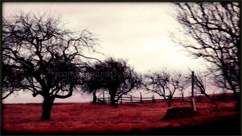 daybreak snowless orchard blueberry barrens roamin