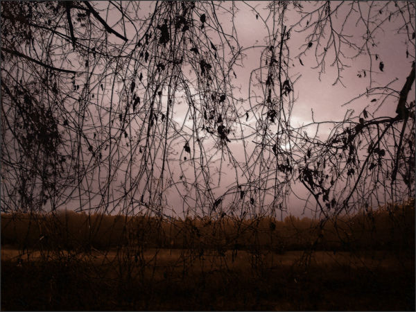 roamin tendrils vines winter bleak