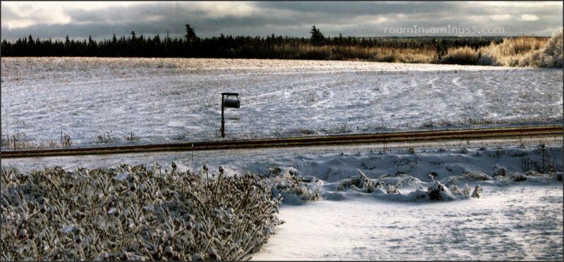 winter snowfall afternoon perfect-light roamin