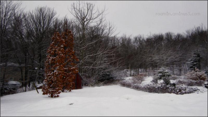 snow storm winter light colour roamin
