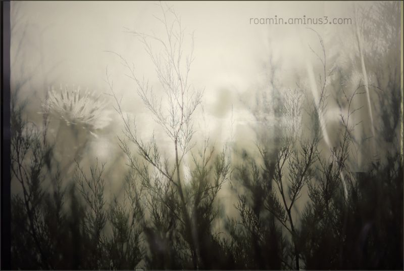 industrial wasteland reaching clover blades roamin