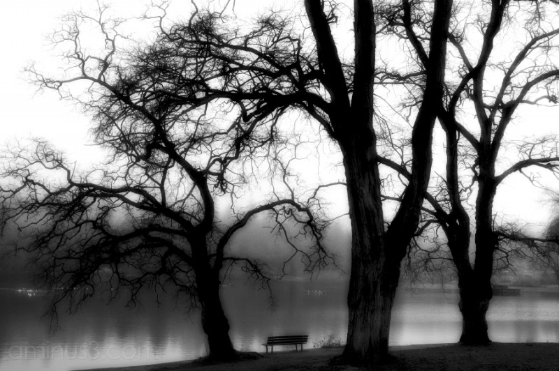 lonely park bench and trees by lagoon