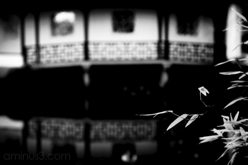 shallow depth of field in chinese garden