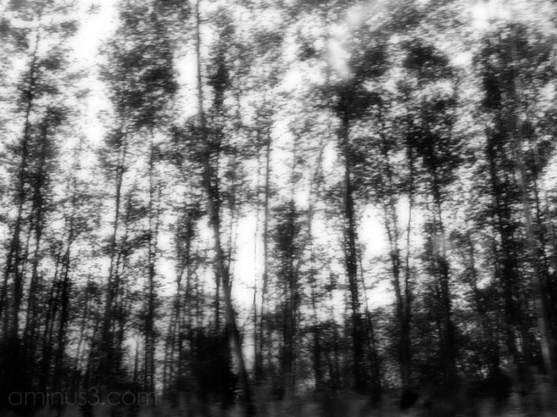 blurred trees along I5