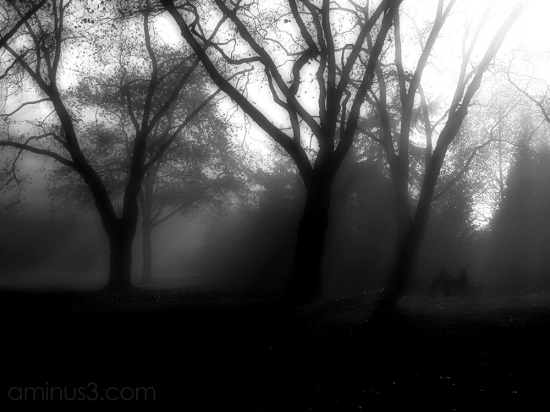 two people meet on park bench in fog