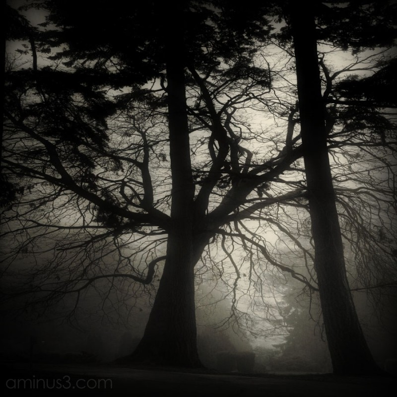 a mysterious ghostly tree in the fog