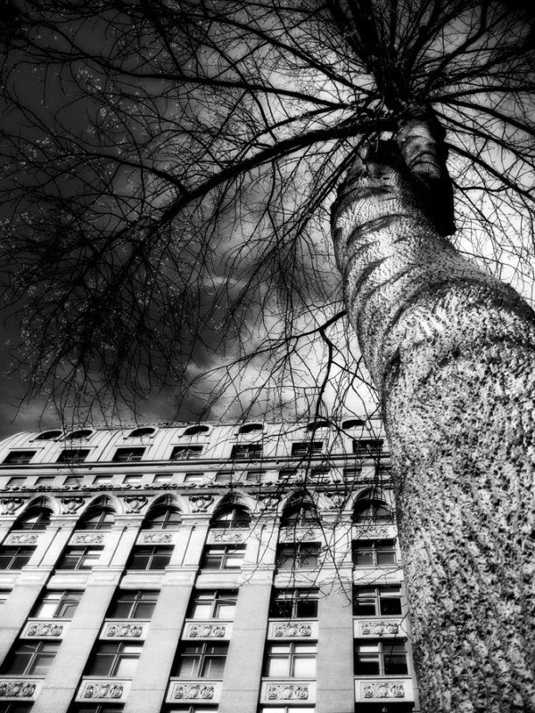 looking up into a tree, a building and a dark sky