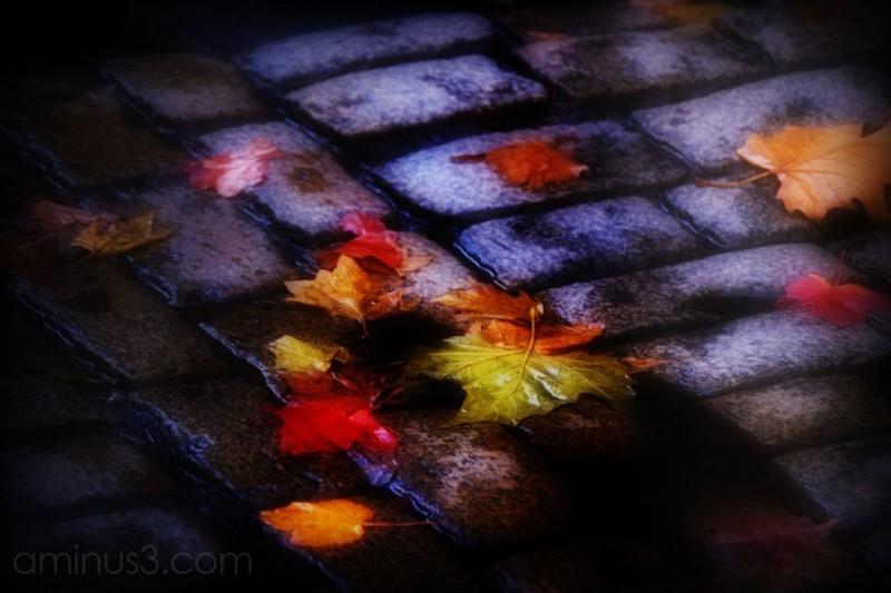 wet autumn leaves on cobblestones