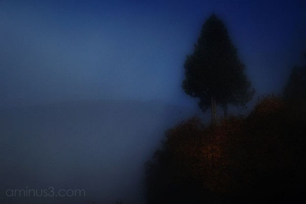 A lone tree high on a ridge in the fog