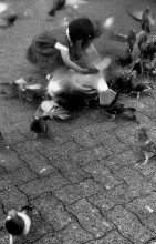 A  young child feeding pigeions