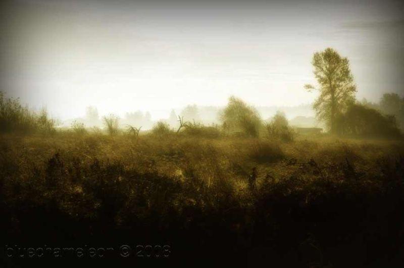 fog rising in earlly morning on wetlands in surrey