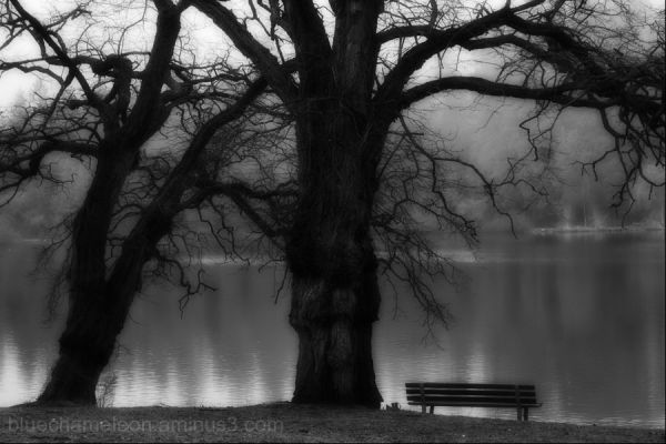 2 spooky trees, bare, over a park bench and lagoon