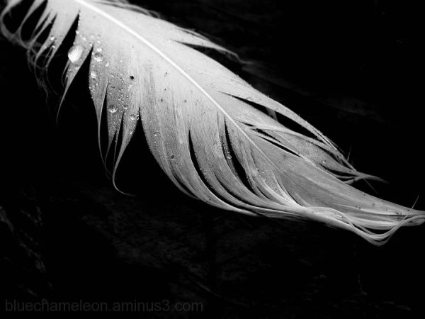 A fallen feather covered in dew