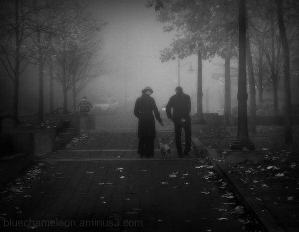 Two people walking a dog in the fog