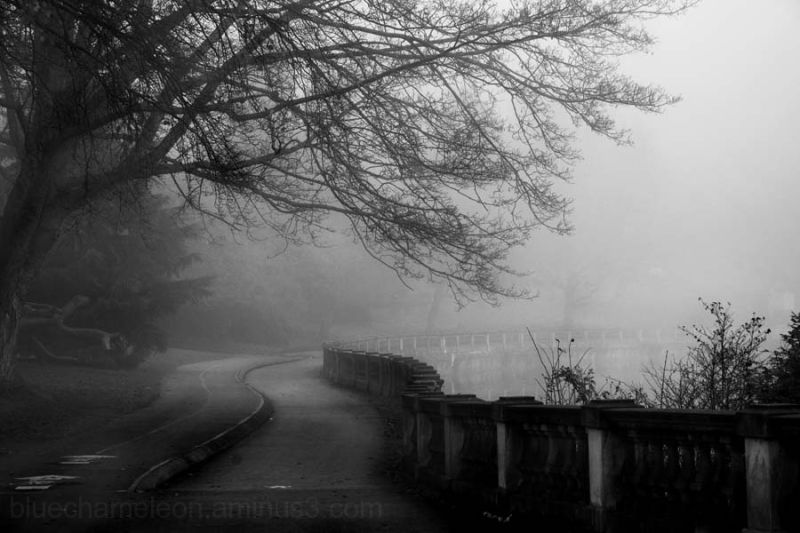 A winding path in the fog with trees and fence.
