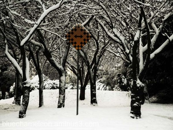A chequered street sign amongst snow covered trees