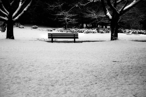 A lone bench in snow surrounded by trees
