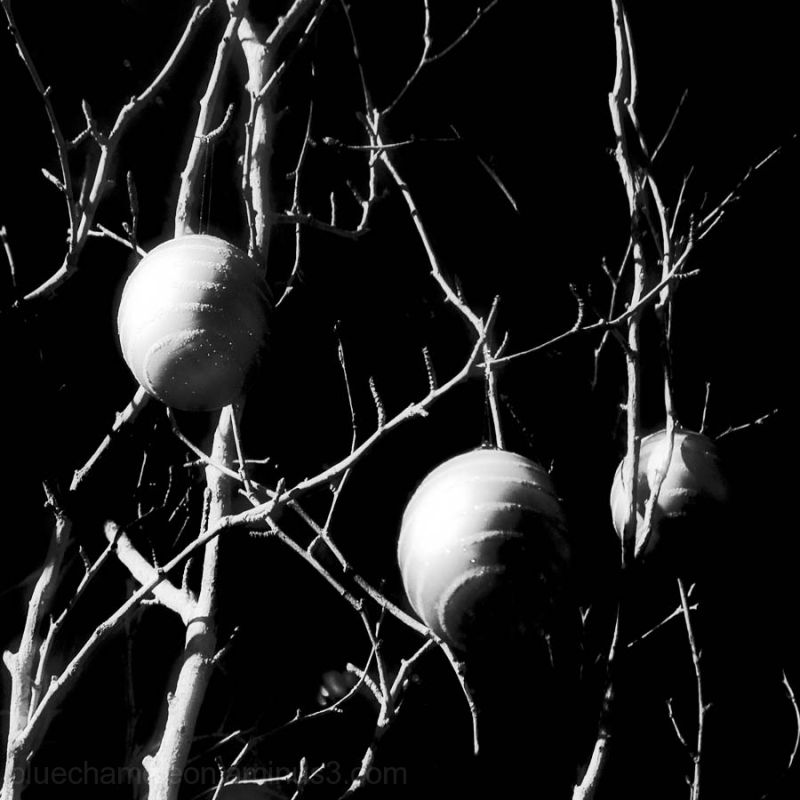 Christmas bulbs hanging on bare branches.