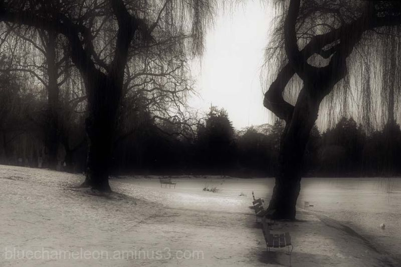 Park benches and weeping willows at a frozen lagoo