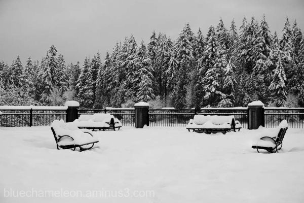 A group of park benched covered in snow.