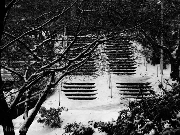 2 sets of stairs covered in snow, thru trees