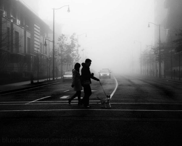 A couple walking a dog in the fog