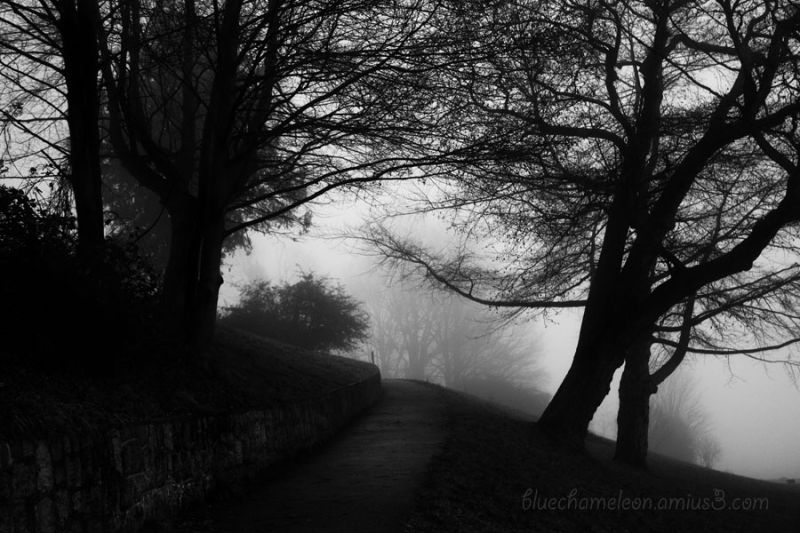 An uphill path with fog and trees