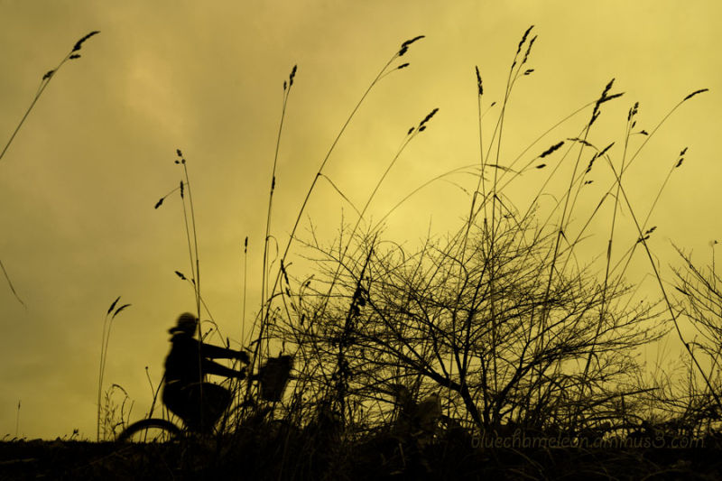 A woman riding bicycle through tall grasses