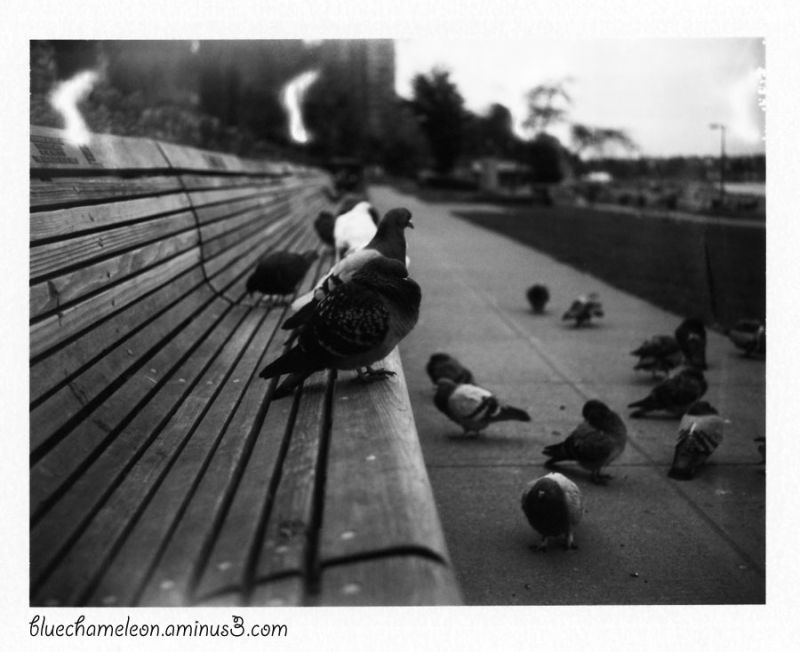 Pigeons on a bench and along the sidewalk
