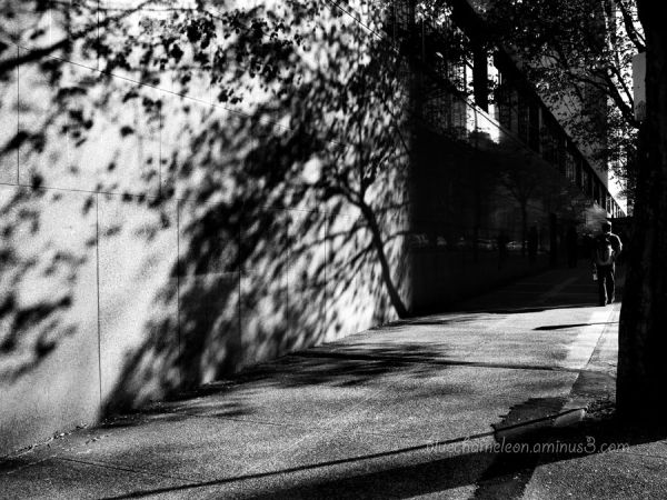 Shadows and reflections of tree and people on wall