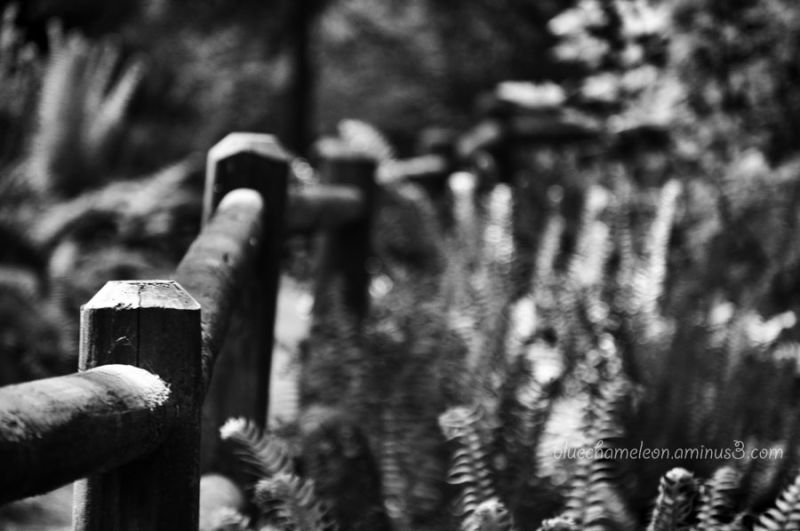 A fence surrounded by ferns