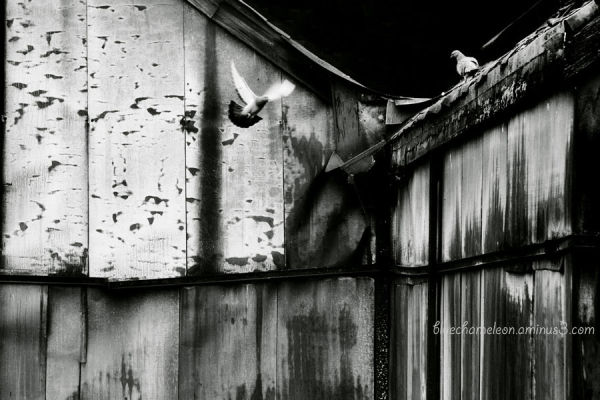 Birds flying against a rusted decaying building