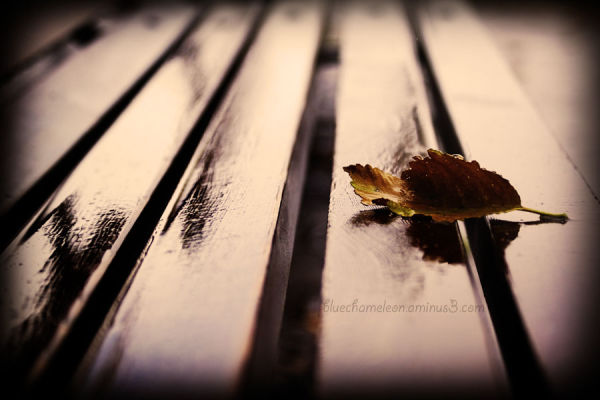 A leaf laying on a wet park bench