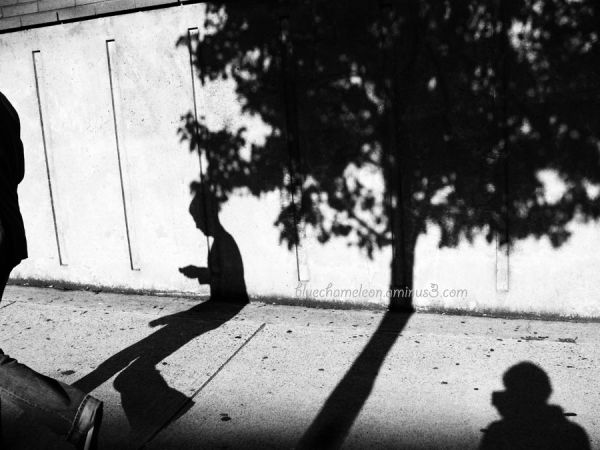 Shadows of self, man and tree against a wall