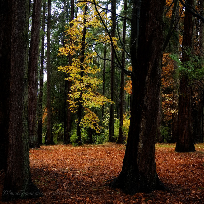 A forest in autumn colours