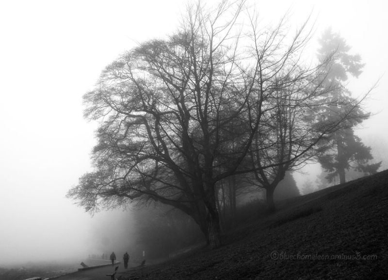 Trees on a slope near ocean in fog