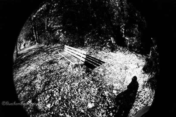 A forest path of fallen leaves with bench & shadow