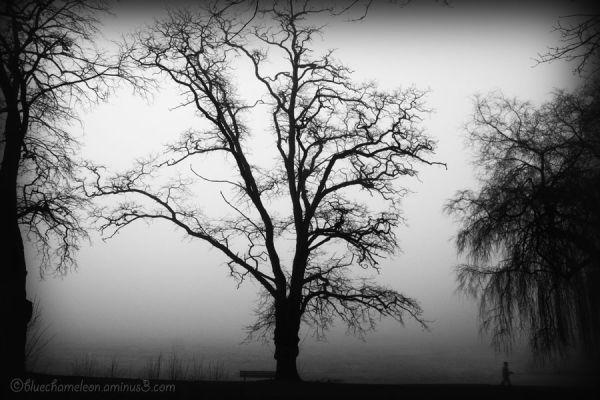 A man walks by spooky trees in fog